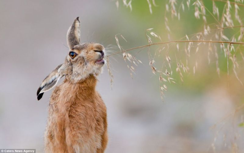 How Long Is Drivers Ed >> The best European wildlife photos | Baltic News Network ...
