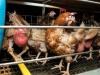 Animal Freedom