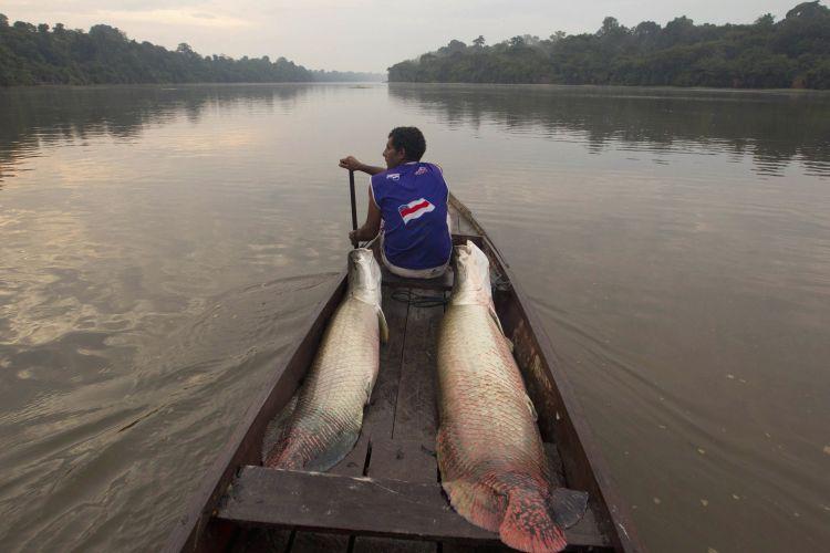 в 1992 году рыбак ловящий рыбу на амазонке почувствовал на крючке что-то очень тяжелое