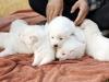 SKOREA-NKOREA-ANIMALS-DOGS-DIPLOMACY