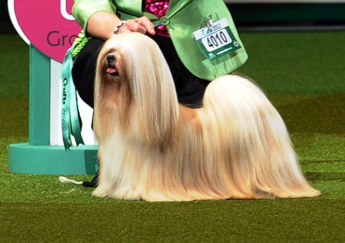 The world's largest dog show | Baltic News Network - News ...