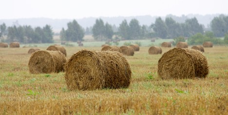 Farmers listed among newcomers to TOP of Latvia's ...