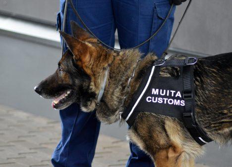 Kazakhstan, contraband, smuggling attempt, cigarettes, Criminal Law, citizens, Mongolia, border control, VID, State Border Guard