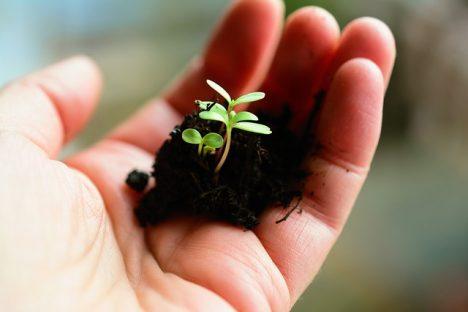 development, bio-economy, climate, Saeima, sustainable development, Vjačeslavs Dombrovskis