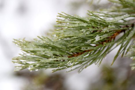 weather, forecast, Latvia, meteorologists
