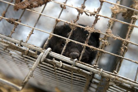 animals, animal rights, activists, mink, fur farm, Lithuania