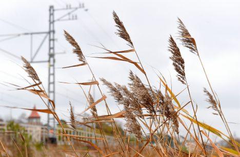 weather, Latvia, forecast, meteorologists