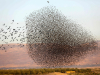 TOPSHOT-PALESTINIAN-ISRAEL-NATURE-ANIMAL-BIRD
